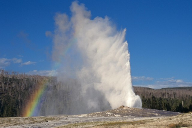 Yellowstone National Park One Day Lower Loop Sightseeing
