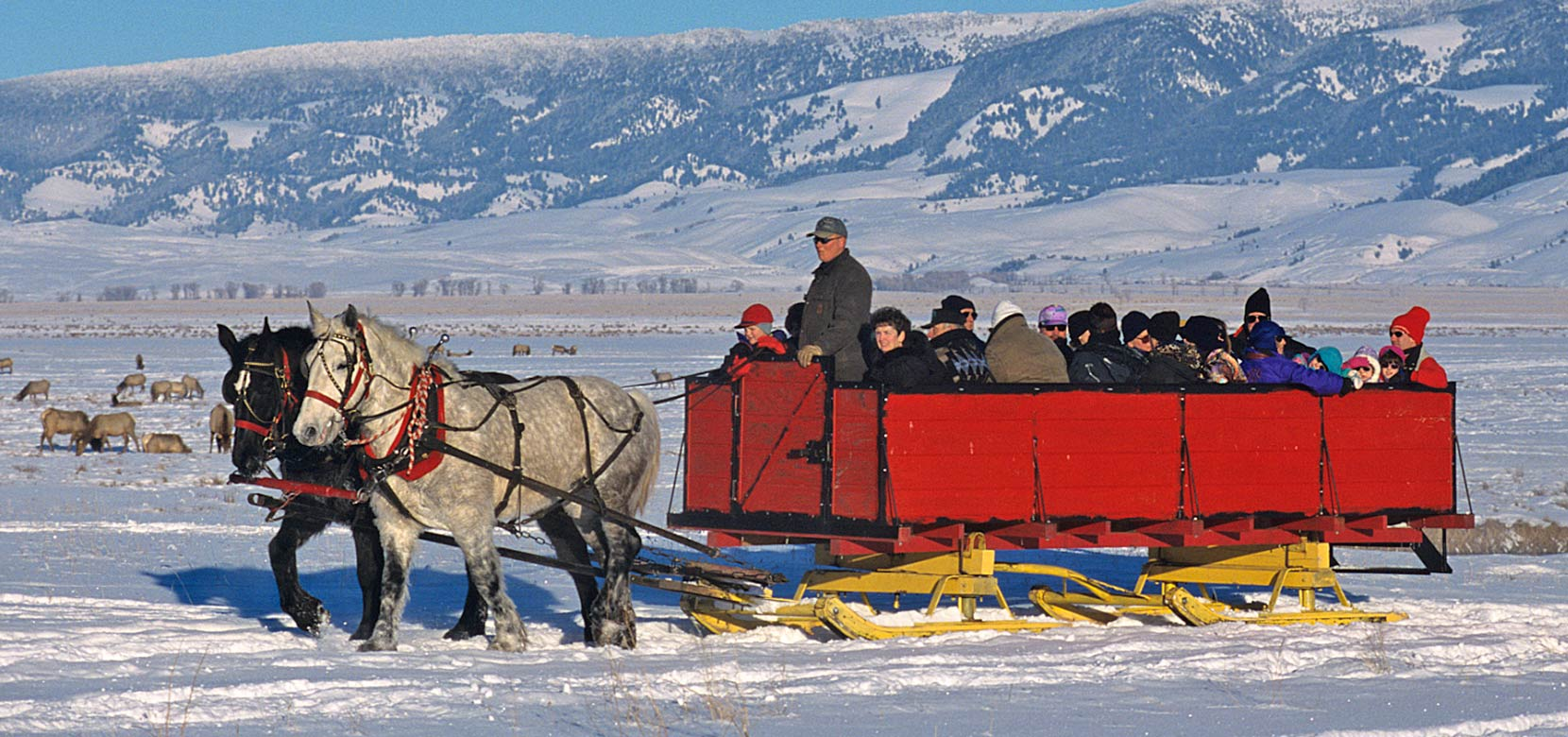hORSE DRAWN SLEIGH RIDES IN JACKSON HOLE
