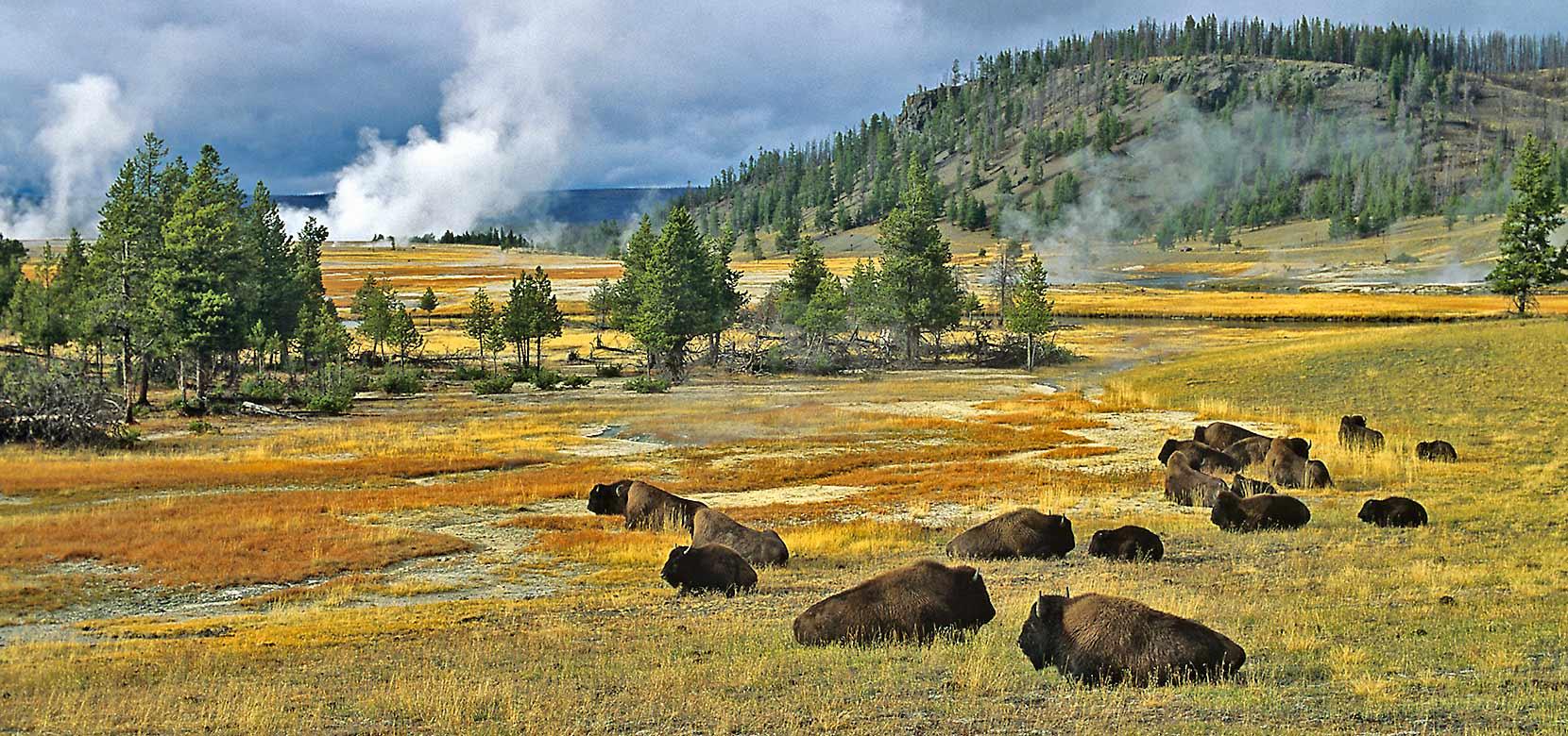 Yellowstone national park jackson hole traveler for Hotels yellowstone national park