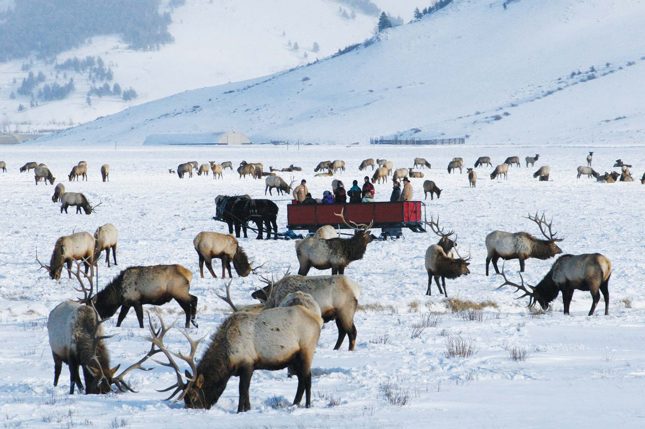 Things To Do in November & December in Jackson Hole